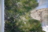 Spider Webs — Stock Photo