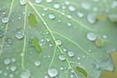 Folha das chuvas — Fotografia Stock