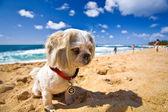 Chien de plage — Photo