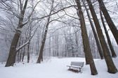 Winter in a Park — Stock Photo