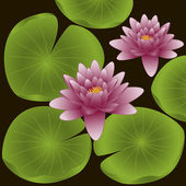 Lotus flowers. Vector illustration — Stock Vector