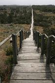 Ścieżka — Zdjęcie stockowe