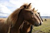 Cavalos de árvore em uma linha — Foto Stock