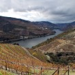 Alto Douro Wine Region — Foto Stock #10535872