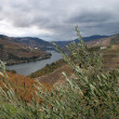 Alto Douro Wine Region — Stock Photo