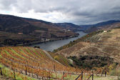 Alto Douro Wine Region — Foto Stock