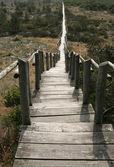 Caminho de madeira — Foto Stock