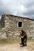 Gamla traditionella hus och åsna — Stockfoto