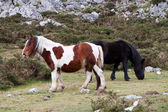 Cavalos selvagens — Foto Stock