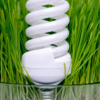 Energy-saving bulb in grass — Stock Photo #10080432