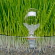Light bulb in grass — Stock Photo #10706438