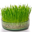 Grass in glass potter — Stock Photo #10708102
