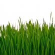 Wall of grass — Stock Photo #10708177