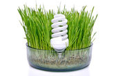 Energy-saving bulb in the grass — Stock Photo