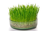 Grass in glass potter — Stock Photo
