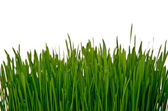 Wall of grass — Stock Photo