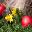 Easter hunt — Stock Photo #9762268