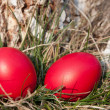 Easter red egg — Stock Photo #9764746