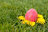 Easter eggs hunt — Stock Photo