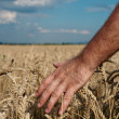 Harvest — Stock Photo #9784560