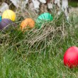 Easter eggs in nest — Stock Photo #9791593