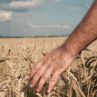 Harvest — Stock Photo #9842460