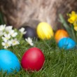 Easter eggs — Stock Photo #9844803