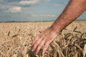 Harvest — Fotografia Stock