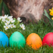 Easter egg — Stock Photo #9859386