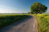 Polish landscape 2 — Stock Photo