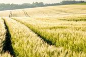 Polish meadows — Stock Photo