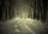 Avenue of oaks — Stock Photo