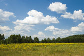 Summer landscape with clouds — Stock Photo