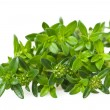 Summer savory — Stock Photo #10351401