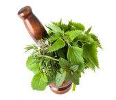 Mix herbs — Stock Photo