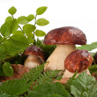 Mushrooms — Stock Photo