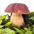 Stock Photo: Mushrooms(boletus edulis)
