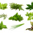 mix aromatic herbs — Stock Photo