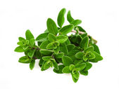 Origanum majorana — Stock Photo