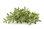 Thymus citriodorus — Stock Photo