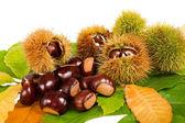 Chestnuts — Stockfoto