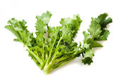Turnip tops — Stock Photo