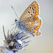 Butterfly — Stock Photo #10592540