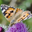 Butterfly — Stock Photo #10651859