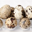 Quail eggs in the container — Stock Photo