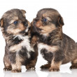 Royalty-Free Stock Photo: Dog puppies