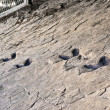 Royalty-Free Stock Photo: Fossil footprints