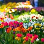 mångfärgade blomsterrabatt på en gräsmatta — Stockfoto