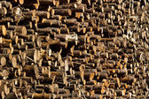 Wood logs — Stockfoto