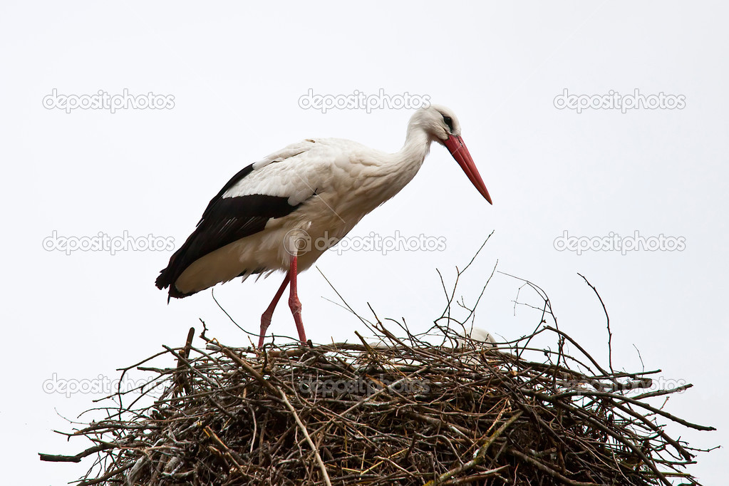 Stork in its nest of branches — Stock Photo #9763646